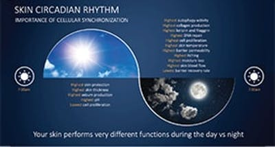 Metabolomics Highlights: The Importance of Circadian Rhythm in Skin image