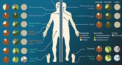 The Microbiome: What Do We Know Now? image